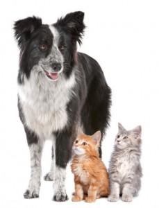 Fodrevejledning til hunde