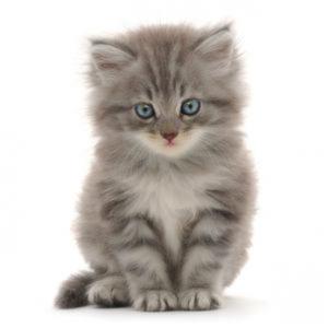 Fodrevejledning til katte og killinger